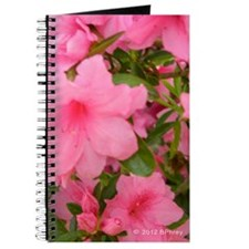 Pink Flowering Azalea Journal