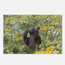 Grizzly Bear Cub Digital Art Postcards (Package of
