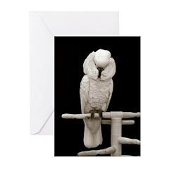 Umbrella Cockatoo 1 Greeting Cards (Pk of 20)