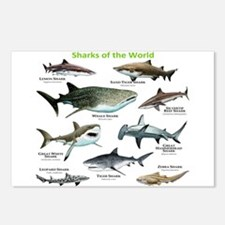 Sharks of the World Postcards (Package of 8)