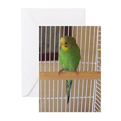 Parakeet Greeting Cards (Pk of 20)