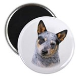 Australian Cattle Dog 2.25