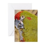 Red-fronted Macaw Greeting Cards (Pk of 10)