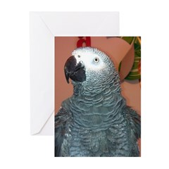 African Grey Greeting Cards (Pk of 20)