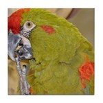 Red-fronted Macaw Tile Coaster