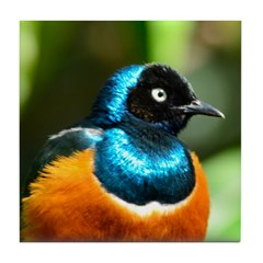 Superb Starling Tile Coaster