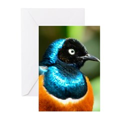 Superb Starling Greeting Cards (Pk of 10)