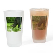 RHINO VENTURING OUT Drinking Glass