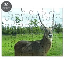 WATERBUCK OF CENTRAL AFRICA Puzzle