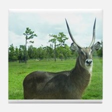 WATERBUCK OF CENTRAL AFRICA Tile Coaster