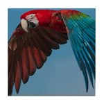 Green-winged Macaw Tile Coaster