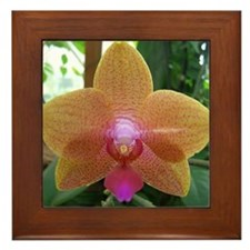 Orchid Perfection Framed Tile
