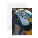 Blue and Gold Macaw Greeting Cards (Pk of 10)