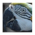 Blue and Gold Macaw Tile Coaster