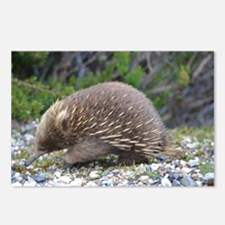Echidna Postcards (Package of 8)