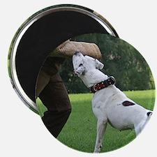 Schutzhund American Bulldog Magnet