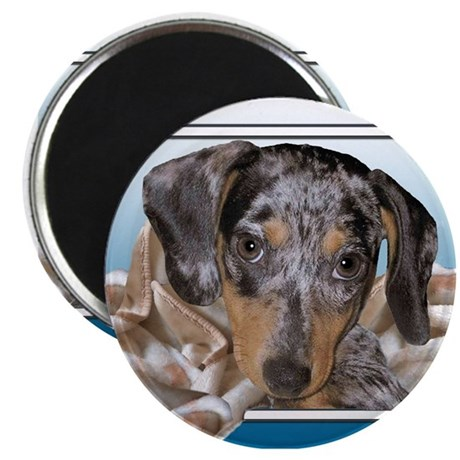 Speckled Dachshund Dogs Magnet