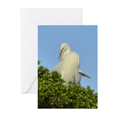 Great Egret Greeting Cards (Pk of 10)