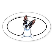 Boston Terrier Peeking Bumper Decal