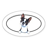 Boston terrier stickers Bumper Stickers
