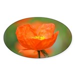 Orange Poppy Flower Sticker (Oval 50 pk)