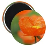 Orange Poppy Flower 2.25