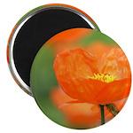 Orange Poppy Flower Magnet