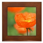 Orange Poppy Flower Framed Tile