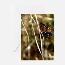 """""""TWO BUTTERFLIES"""" Greeting Cards (Pk of 10)"""