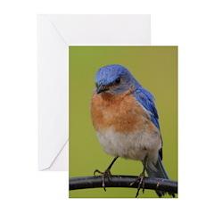 Eastern Bluebird Greeting Cards (Pk of 20)