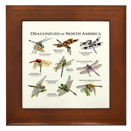 Dragonflies of North America Framed Tile