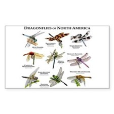 Dragonflies of North America Decal
