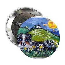 Australian Shepherd blue merl Button
