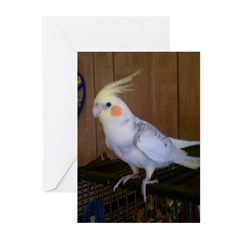 Cockatiel Greeting Cards (Pk of 20)