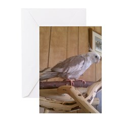 Cockatiel 2 Greeting Cards (Pk of 20)