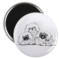 3 Pekingese Puppies Magnet