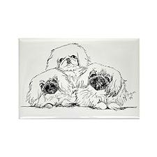 3 Pekingese Puppies Rectangle Magnet