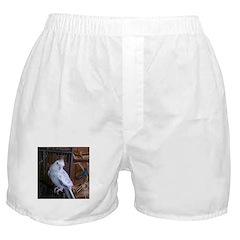 Cockatiel 4 Boxer Shorts