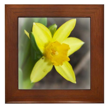 daffodil sq Framed Tile