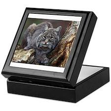 Bob Cat Keepsake Box