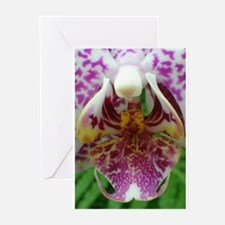 Unique Orchid close up Greeting Cards (Pk of 10)