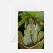 Cute Orchid close up Greeting Cards (Pk of 10)
