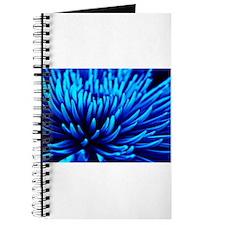 Blue Chrysanthemum flower Journal