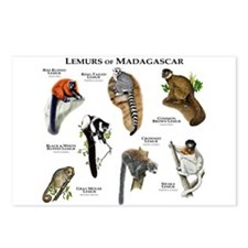 Lemurs of Madagascar Postcards (Package of 8)