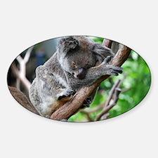 Sleeping Koala 2 Decal