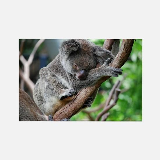 Sleeping Koala 2 Rectangle Magnet