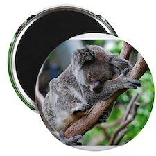 Sleeping Koala 2 Magnet
