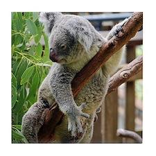 Koala Posing Tile Coaster