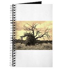 Texas Tree Journal