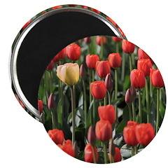 Tulips 2.25